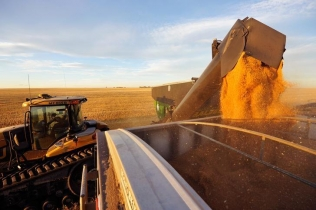 Wheat is dumped into a grain truck for transport on the Stephen and Brian Vandervalk farm near Fort MacLeod